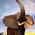 Elephant by Marilyn Hunt