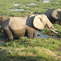 Elephant Mother And Calves by Serah Mbii