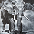 Elephant Night Walker by Karl Hamilton-Cox
