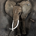 Elephant No 04 by Maria Astedt