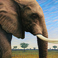 Elephant On Safari by James W Johnson