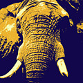 Elephant Popart by Angela Doelling AD DESIGN Photo and PhotoArt