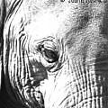 Elephant Portret by Judith Rosink