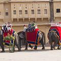 Elephant Ride 2 by Elena Perelman