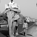 Elephant Road Traffic by Sonal Dave