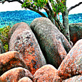 Elephant Rocks And Tree by Larry Jost