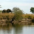 Elephant Sighting by Karen Zuk Rosenblatt