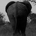 Elephant Tail Gate by John Bradford