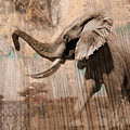 Elephant Visions Wall Art by Karla Beatty