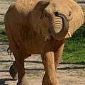 Elephant Walk by Maria Urso