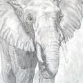 Elephant Walk by Nancy Rucker
