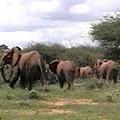 Elephant Walk Tsavo National Park Kenya by Jay Milo