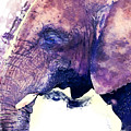 Elephant Watercolor Painting by Justyna JBJart