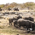 Elephant Watering Hole by Marc Levine