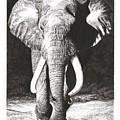 Elephant by Yana Wolanski