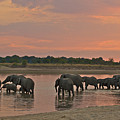 Elephants At Dusk by Johan Elzenga