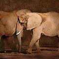 Elephants by Carol Deltoro
