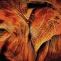 Elephant's Ear by Elaine Walsh