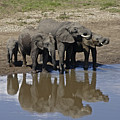 Elephants In The Mirror by Michele Burgess
