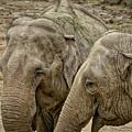 Elephants by Ingrid Dendievel
