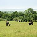 Elephants On The Savannah by David Morefield