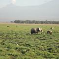 Elephants by Serah Mbii
