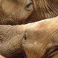 Elephants by Thomas Morris
