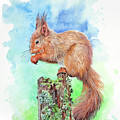 Elevenses - Red Squirrel by Michelle Cashmore