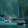 Elfin Cove Alaska by Harry Spitz