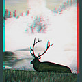 Elk - Use Red-cyan 3d Glasses by Brian Wallace