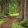 Elk Camp Trail by Adam Pender