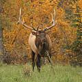 Elk by Doris Potter