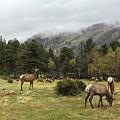 Elk Herd by Lorraine Baum