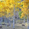 Elk In Rmnp Colorado by Nava Thompson