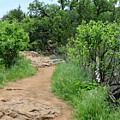 Elk Mountain Trail by Charrie Shockey