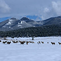 Elk On A Snow Covered Moraine by Tranquil Light  Photography