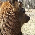 Elk Profile by Jane Butera Borgardt