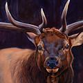 Elk Study by JQ Licensing