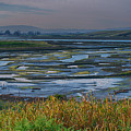 Elkhorn Slough by Bill Roberts