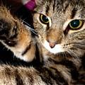 Ellie Cat by Dianne Pettingell