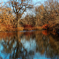 Elm By The Connecticut River In Autumn by Nancy Griswold