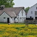 Elm Grove Farm by Cindy Roesinger