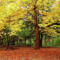 Elora Gorge Campsite In Fall by Debbie Oppermann