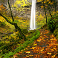 Elowah Autumn Trail by Mike  Dawson