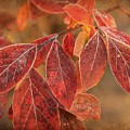 Embers Of Autumn by Lisa Hurylovich