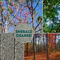 Embrace Change by Rachel Hannah