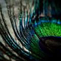 Emerald Shadows by Lisa Knechtel