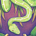 Emerald Tree Boa by Amy S Turner