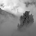 Emerging From Winter's Fog In Yellowstone by Bruce Gourley