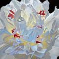 Emerging  by Kirsten Throneberry